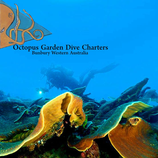 Octopus Garden Dive Charters Company Logo by Octopus Garden Dive Charters in Bunbury WA