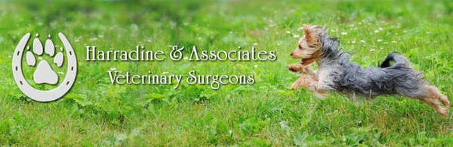 Vet,Veterinary Clinic | Harradine and Associates Veterinary Hospital Bunbury, Western Australia